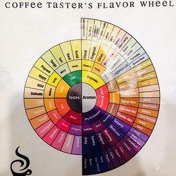 coffee tester flavour wheel