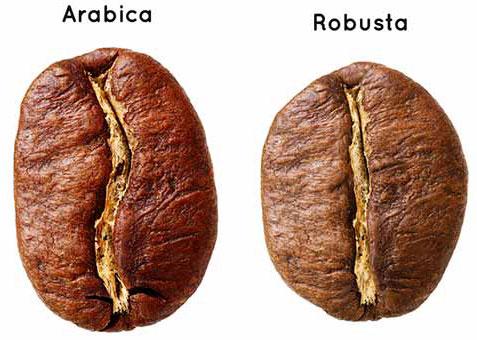 Robusta-and-Arabica-bean